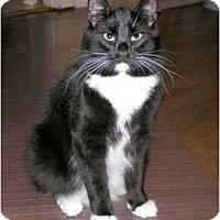 Adopt A Pet :: Itty Bitty - Portland, OR