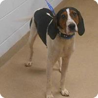 Adopt A Pet :: Gemma - Wooster, OH