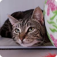 Adopt A Pet :: Minuet - Salisbury, MA