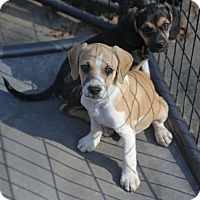 Adopt A Pet :: Diego - Nesbit, MS