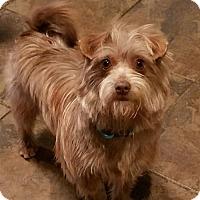 Adopt A Pet :: Gizmo - Alexandria, KY