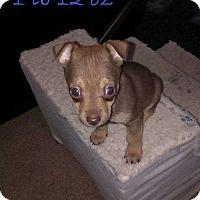 Adopt A Pet :: Phoenix - Livermore, CA