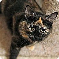 Adopt A Pet :: Ali - Tustin, CA