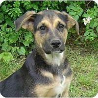 Adopt A Pet :: Scruffy - Pike Road, AL