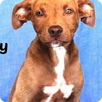 Adopt A Pet :: Andy - Sunnyvale, CA