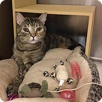 Adopt A Pet :: Topanga - Colmar, PA