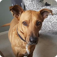 Adopt A Pet :: Radisson - Warsaw, IN