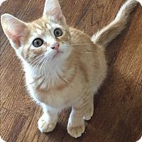 Adopt A Pet :: Jack - Kelso/Longview, WA