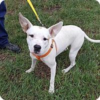 Adopt A Pet :: Bunny-Foster Me? - Detroit, MI