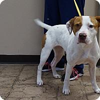 Adopt A Pet :: Nellie - Oviedo, FL