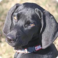 Adopt A Pet :: Shiloh - San Antonio, TX