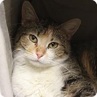 Adopt A Pet :: Merla II - Naperville, IL