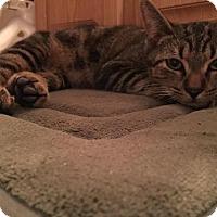 Adopt A Pet :: Sunny - Alpharetta, GA