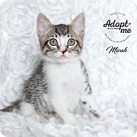 Adopt A Pet :: Micah - Houston, TX