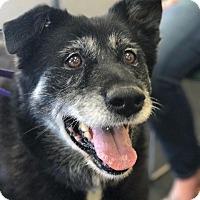 Adopt A Pet :: Mama Bear - Indianapolis, IN