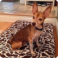 Adopt A Pet :: Skippy - Hamilton, ON