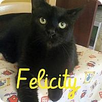 Adopt A Pet :: Felicity - Grand Blanc, MI