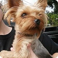 Adopt A Pet :: Kelvin Taylor - Gainesville, FL