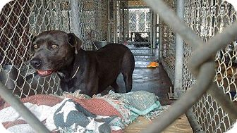 Terrier (Unknown Type, Medium) Mix Dog for adoption in Livingston Parish, Louisiana - Piper