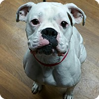 Adopt A Pet :: Zeus - Lisbon, OH