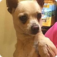 Adopt A Pet :: Randall - St Louis, MO