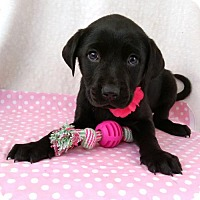 Adopt A Pet :: Alice - Newark, DE