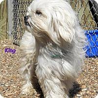 Adopt A Pet :: King - Oskaloosa, IA