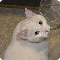 Adopt A Pet :: Snow - Medina, OH