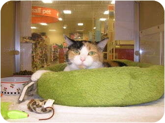 Calico Cat for adoption in Woodstock, Georgia - Lily
