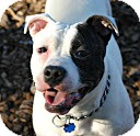 Terrier (Unknown Type, Medium) Mix Dog for adoption in Tinton Falls, New Jersey - Sunny