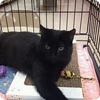 Adopt A Pet :: Blondie - Modesto, CA