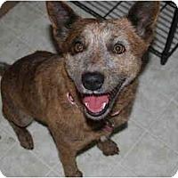 Adopt A Pet :: Mica - Phoenix, AZ