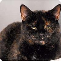 Adopt A Pet :: Kali - Lunenburg, MA