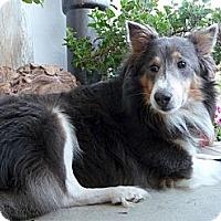 Adopt A Pet :: Smokey Bear - San Diego, CA