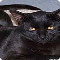 Adopt A Pet :: Axel - El Cajon, CA