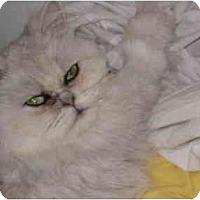 Adopt A Pet :: Jade - Beverly Hills, CA