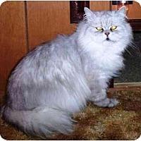 Adopt A Pet :: FlapJack - Warren, OH