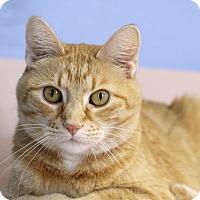 Adopt A Pet :: Corine - Chicago, IL