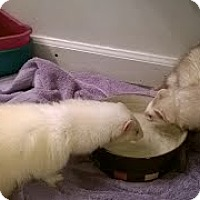 Adopt A Pet :: Kaeles - Spokane Valley, WA