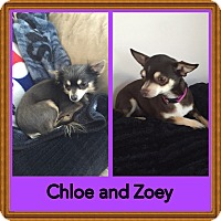 Adopt A Pet :: Chloe and Zoe - Hampton, VA