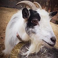 Adopt A Pet :: Penelope - Huguenot, NY