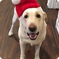 Adopt A Pet :: Zero - Torrance, CA