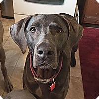 Adopt A Pet :: Lilly - Grand Haven, MI