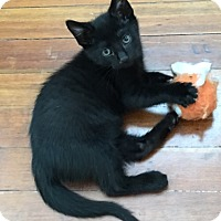 Adopt A Pet :: Two Point Oh - Chattanooga, TN