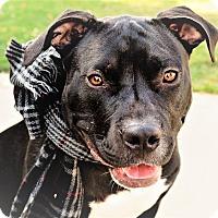 Adopt A Pet :: Spencer - Eastpointe, MI