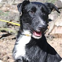 Adopt A Pet :: Jester - Fillmore, CA