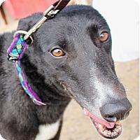 Adopt A Pet :: Hopper - Tucson, AZ