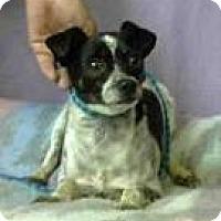 Adopt A Pet :: Bonita Cranson - Seattle, WA