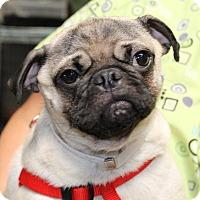 Adopt A Pet :: Kirk - Gardena, CA