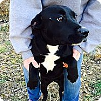 Adopt A Pet :: Baylee - Lewisville, IN